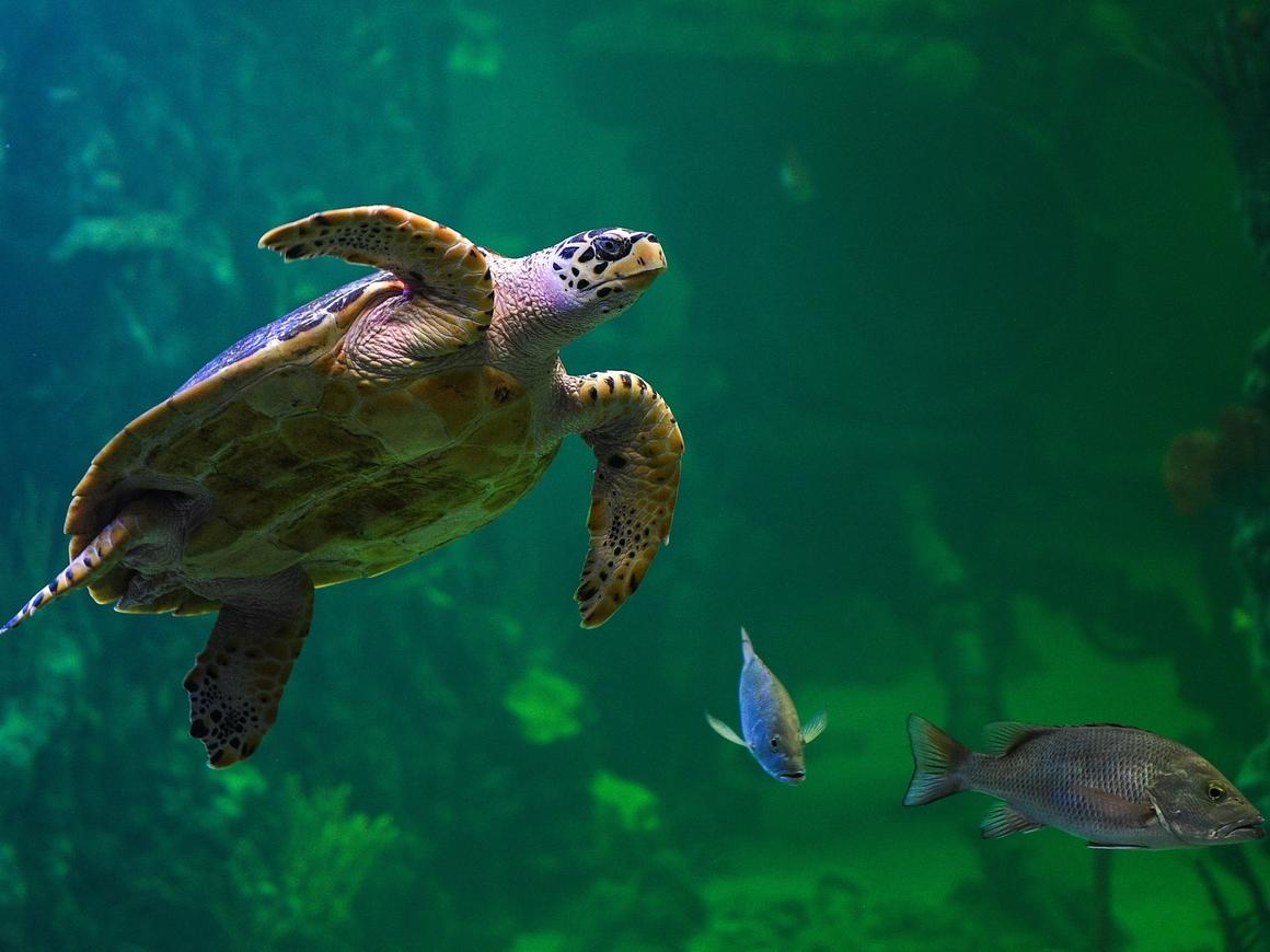 В доме на Мадагаскаре браконьеры прятали 10 000 черепах