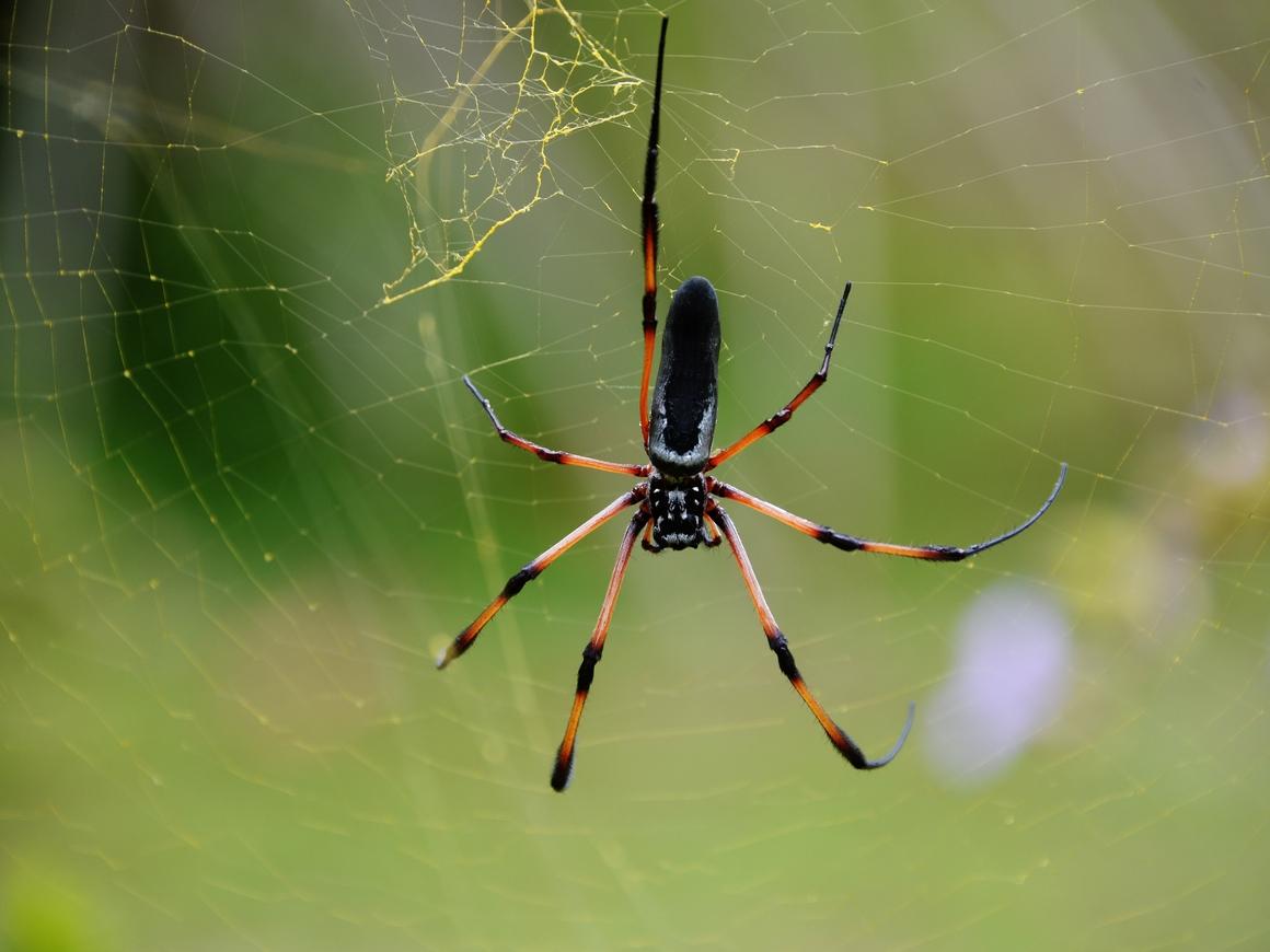 Британские учёные научили пауков прыгать. Хорошо, что они пока не летают