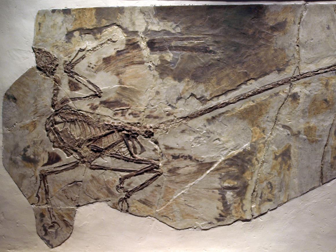 Учёные говорят, что у пернатых динозавров тоже была перхоть - ей 125 млн лет
