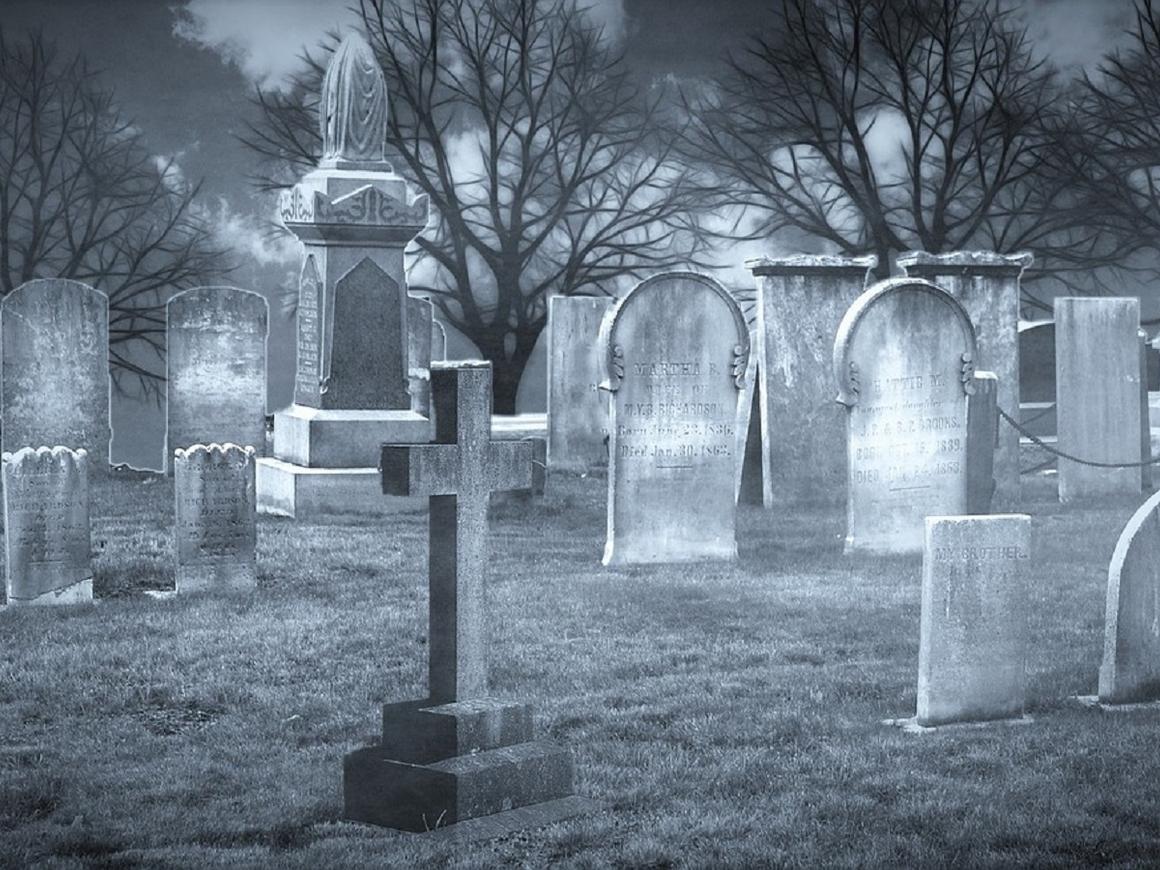 """Под Питером появилось """"кладбище"""" вывесок (фото)"""