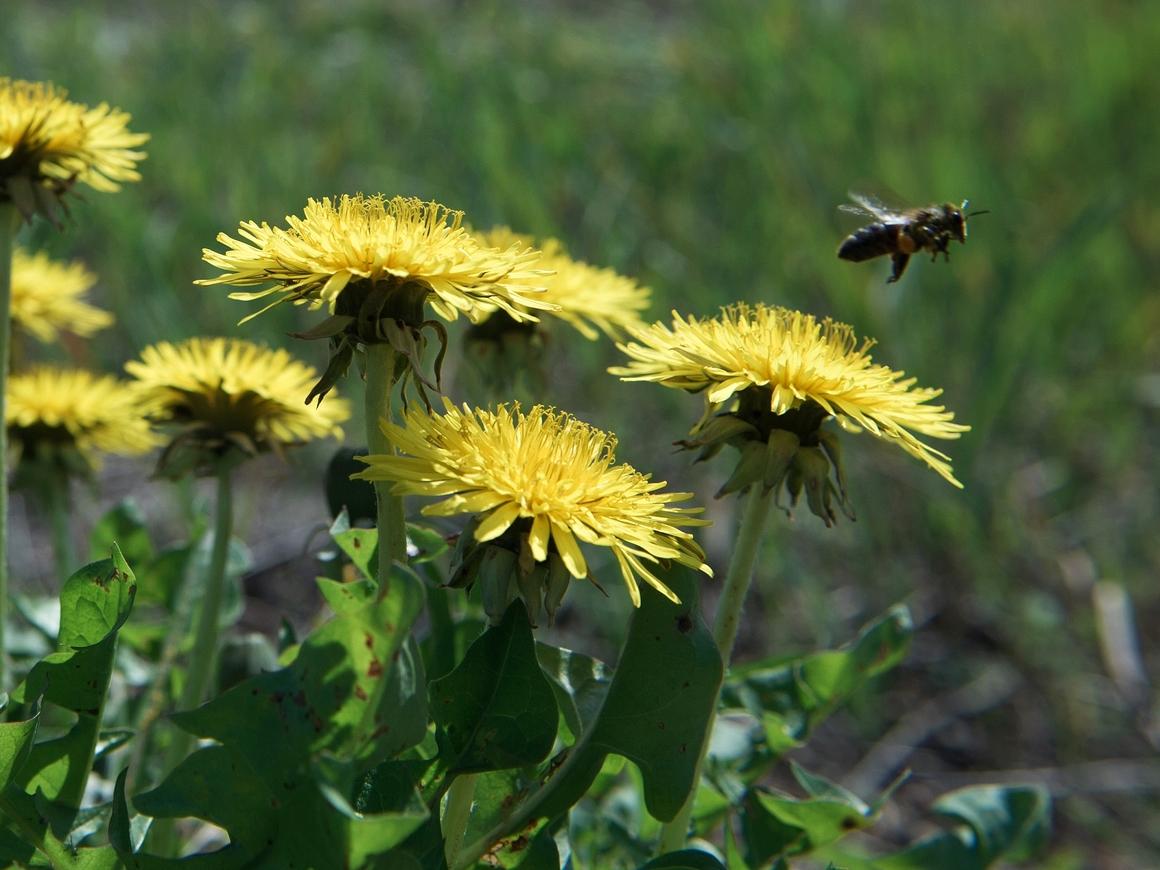 """Австралийские учёные выяснили, что пчёлы знакомы с понятием """"ноль"""""""