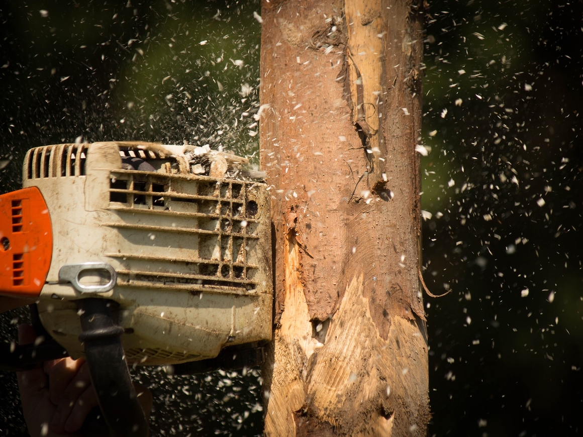 Замели следы: нефтяники воткнули незаконно спиленные деревья обратно в землю