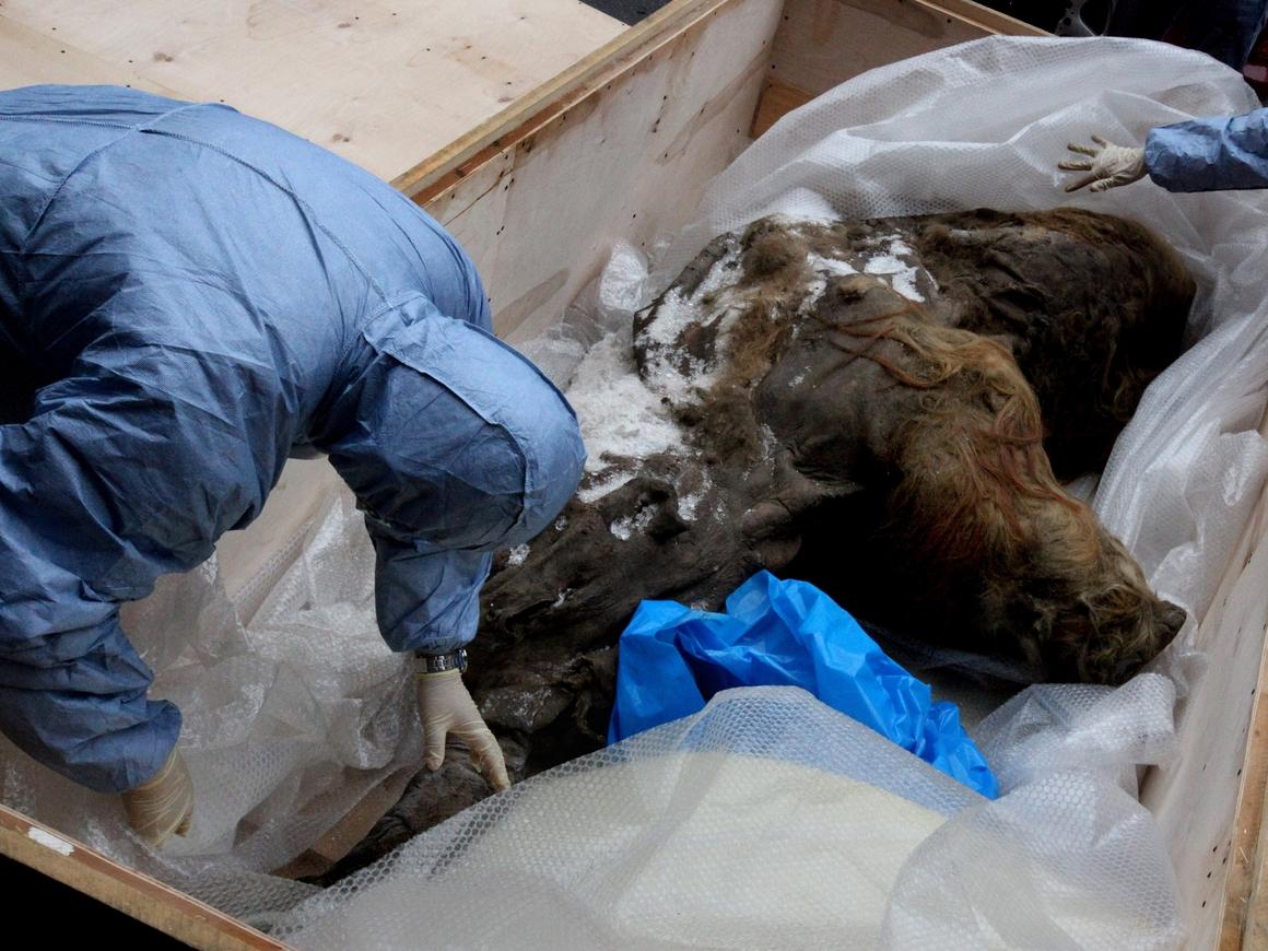 Почти парк Юрского периода: учёные планируют вернуть к жизни вымерших мамонтов