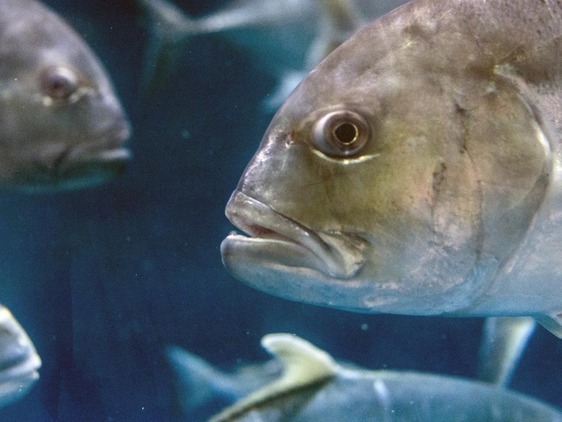 В Китае поймали рыбоголубя - у них там свой Чернобыль
