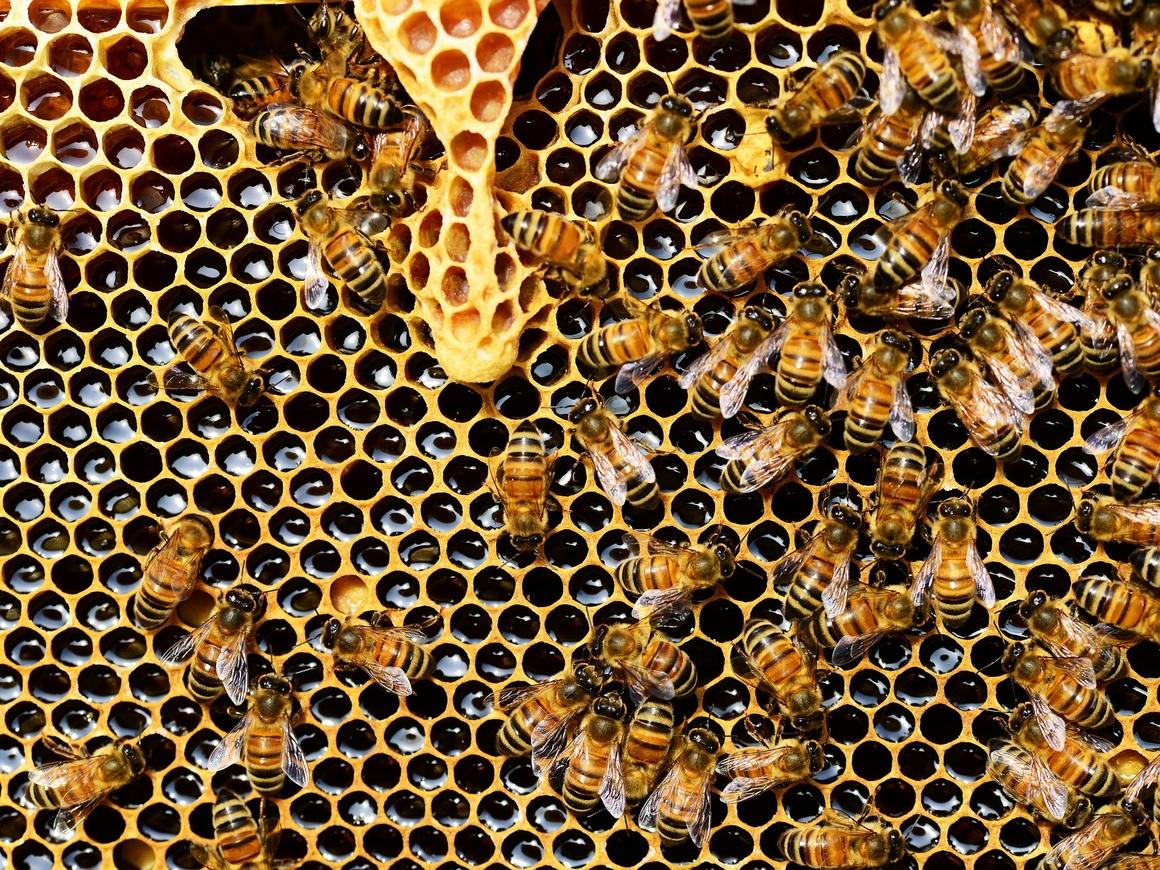 В мегаполисах появились новые жители - это пчёлы