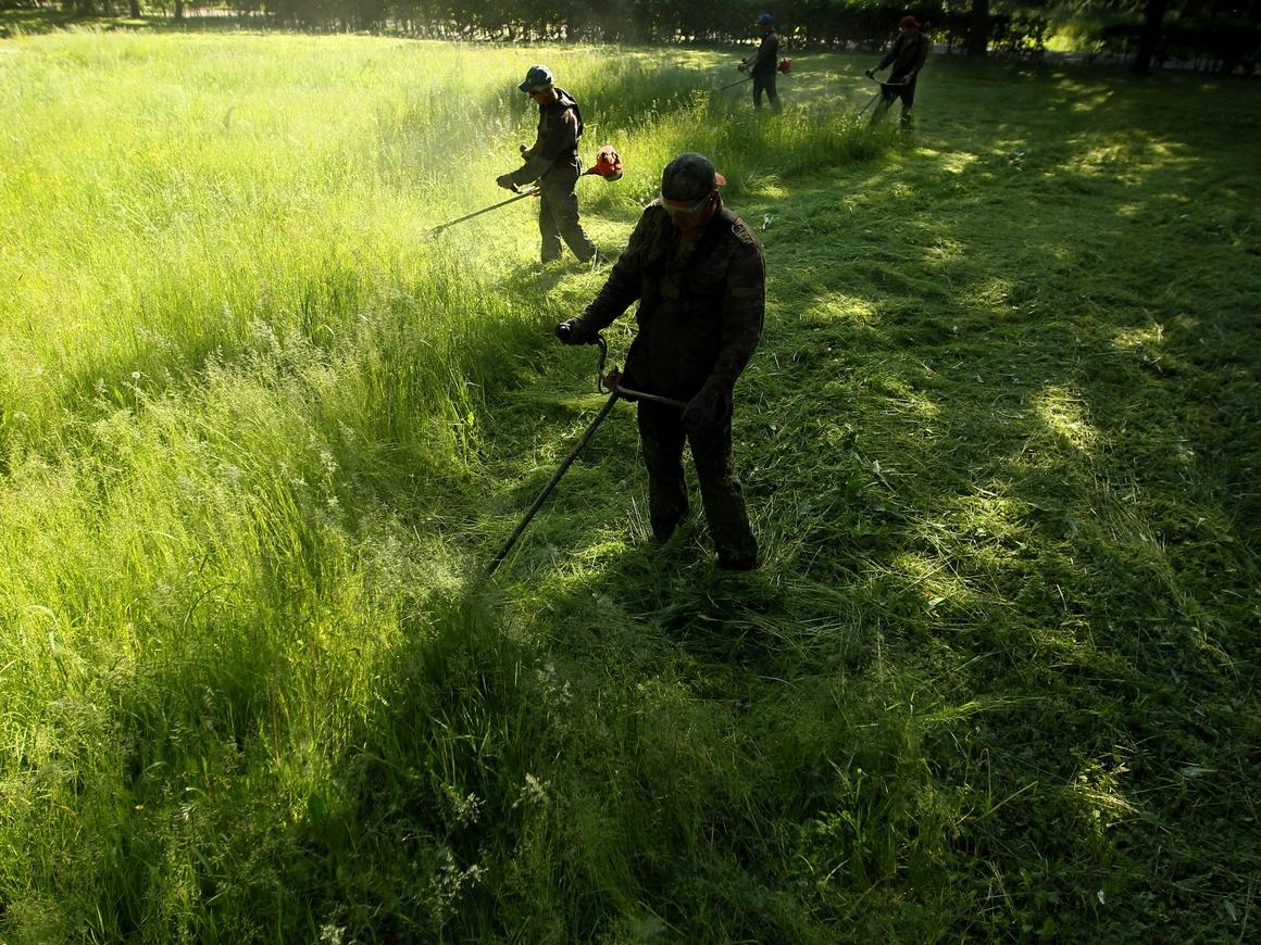 Полиция приехала за ребенком, который косил газон. Теперь мелкий популярен