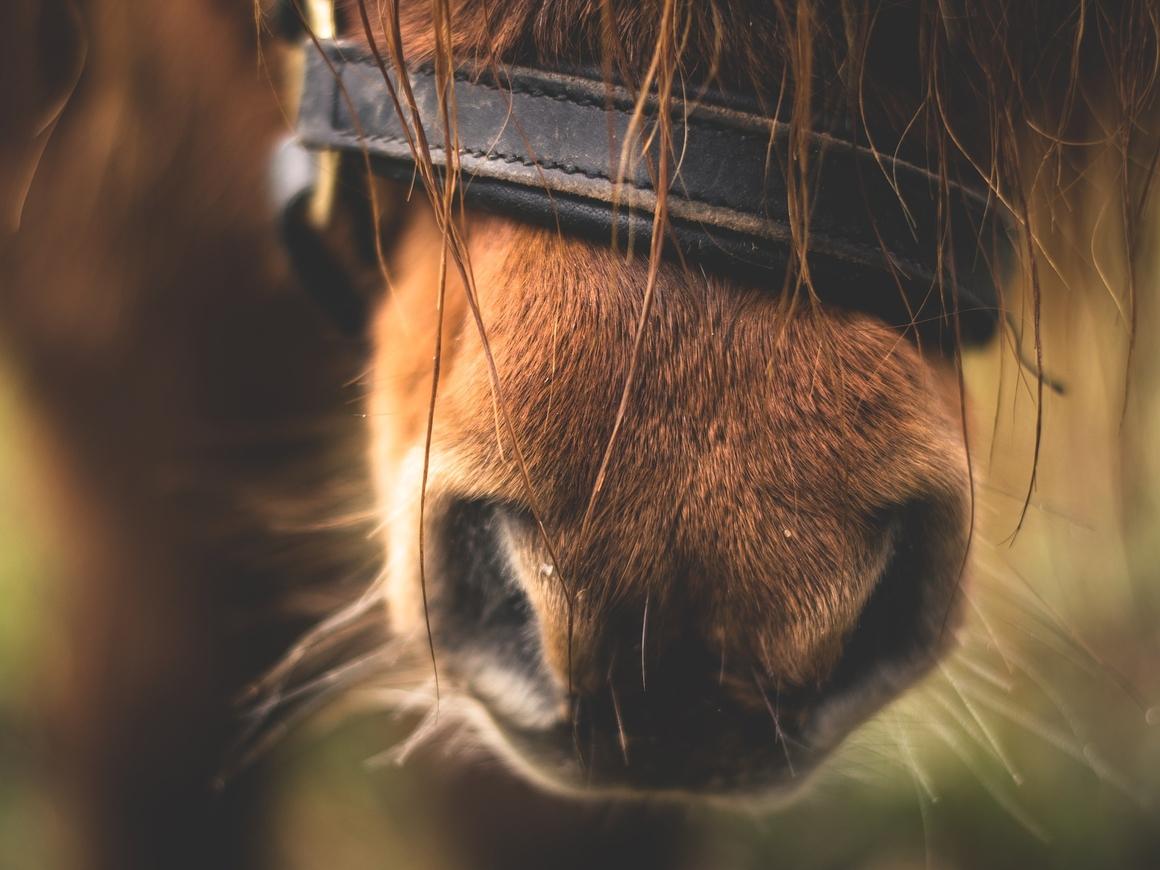 Фото-инструкция: как перевезти пони в легковушке