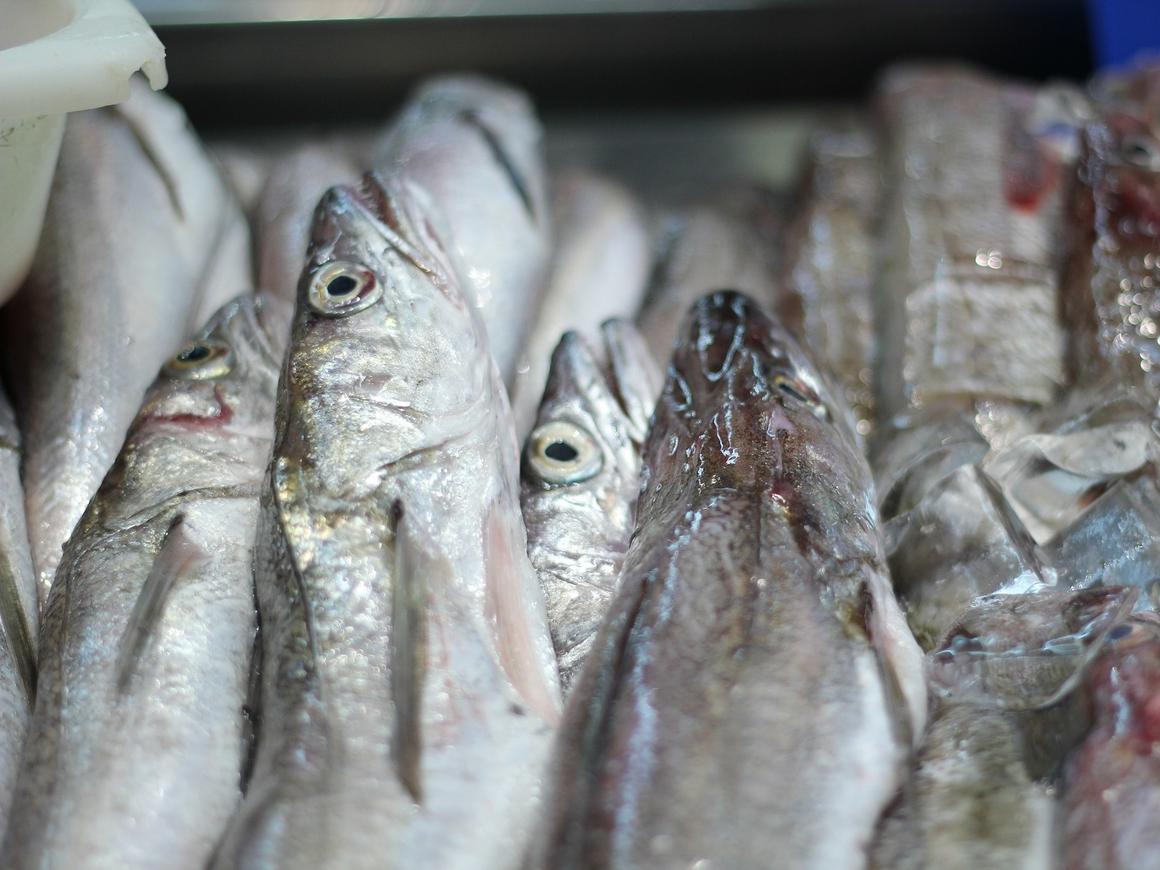 Голландская полиция нашла в рыбе кокаина на 22 миллиона евро (фото)