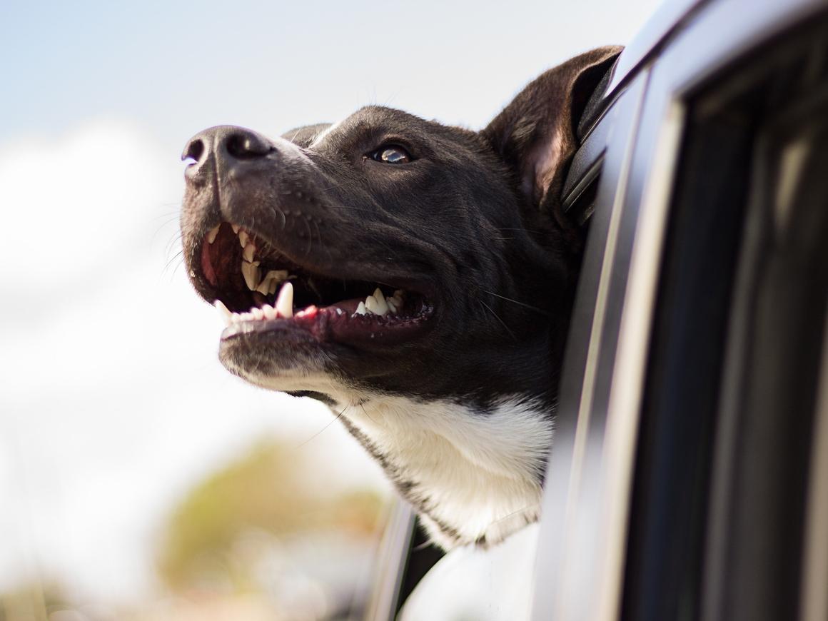 Друг в беде не бросит - Собаки мчатся на помощь хозяину, когда слышат его плач
