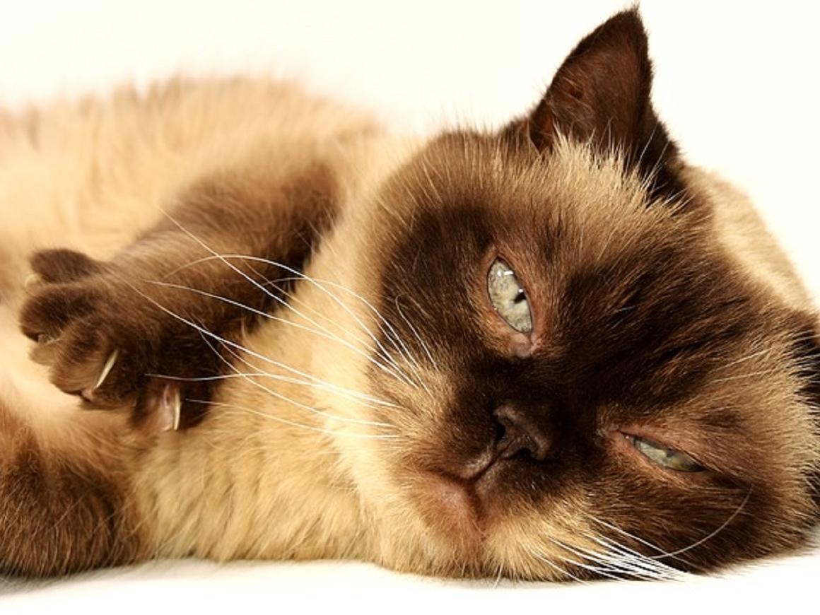 Убирая за кошками, вы рискуетестать предпринимателем