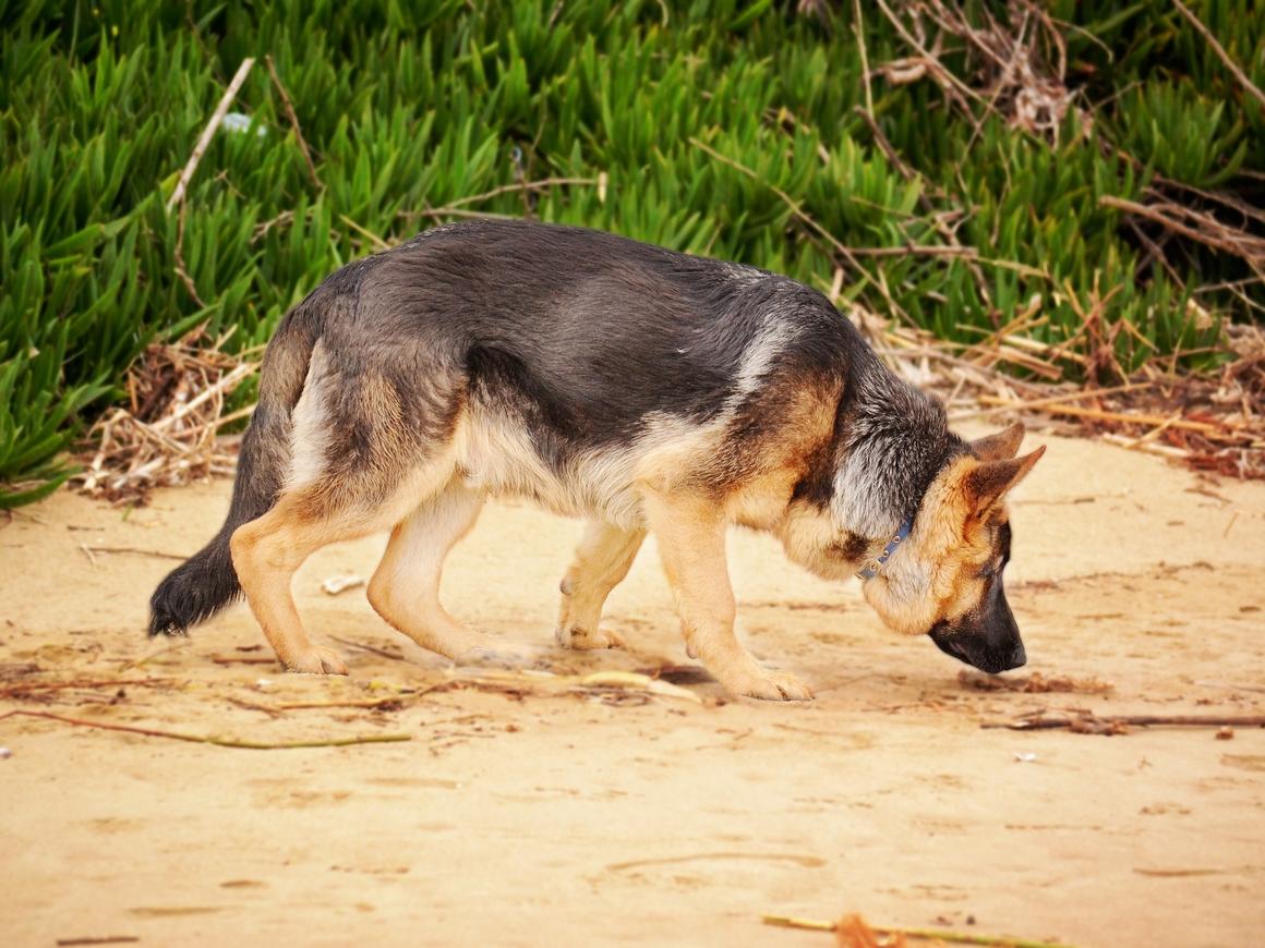 Колумбийская банда хочет убить служебную собаку - она вынюхивает все их нычки