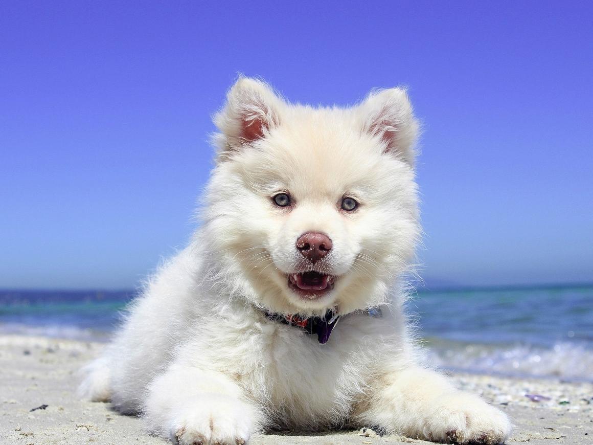 Остров собак существует: в Теркс и Кайкос есть всё для любителей пёсиков