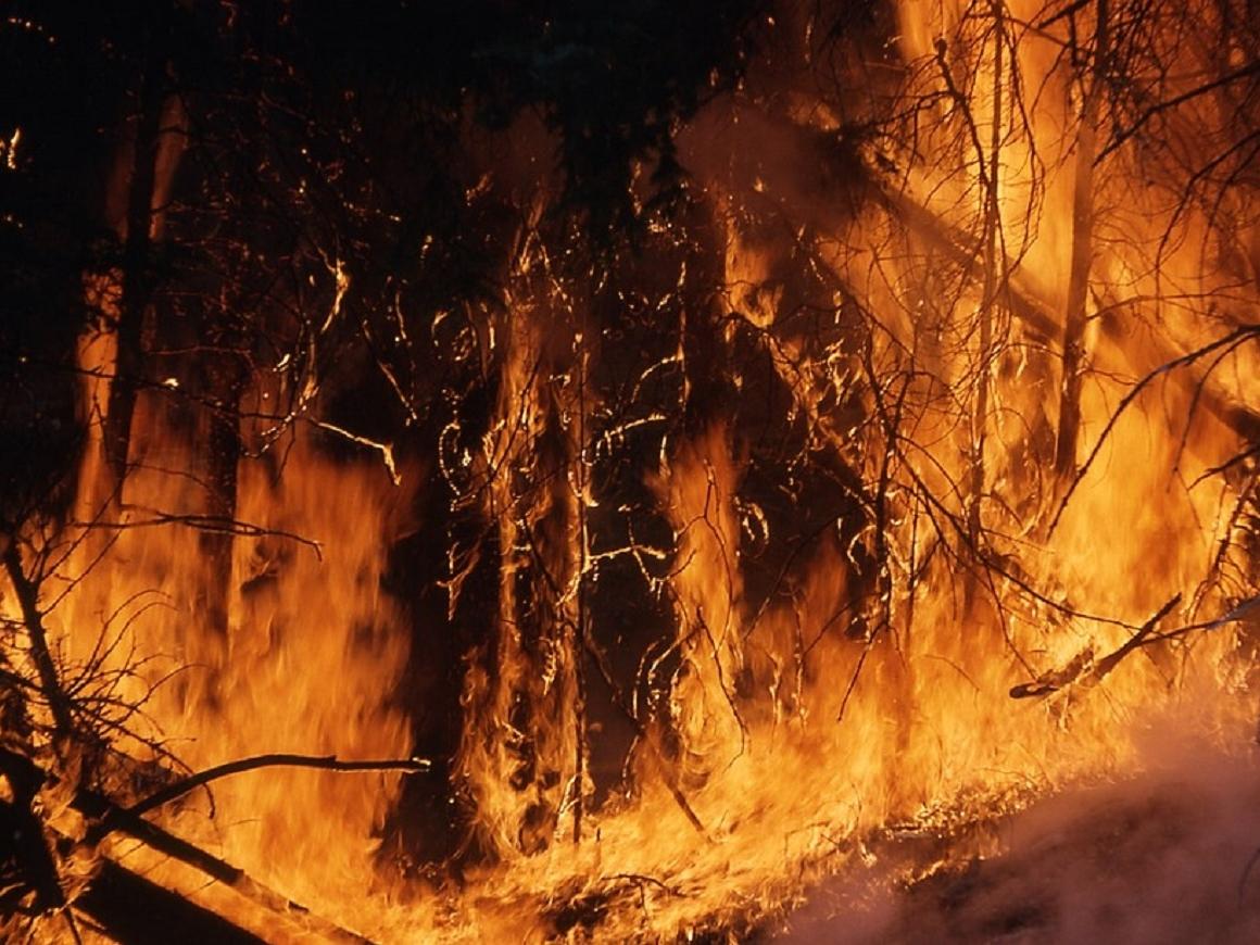 Греция в огне (видео). Почему так много погибших?
