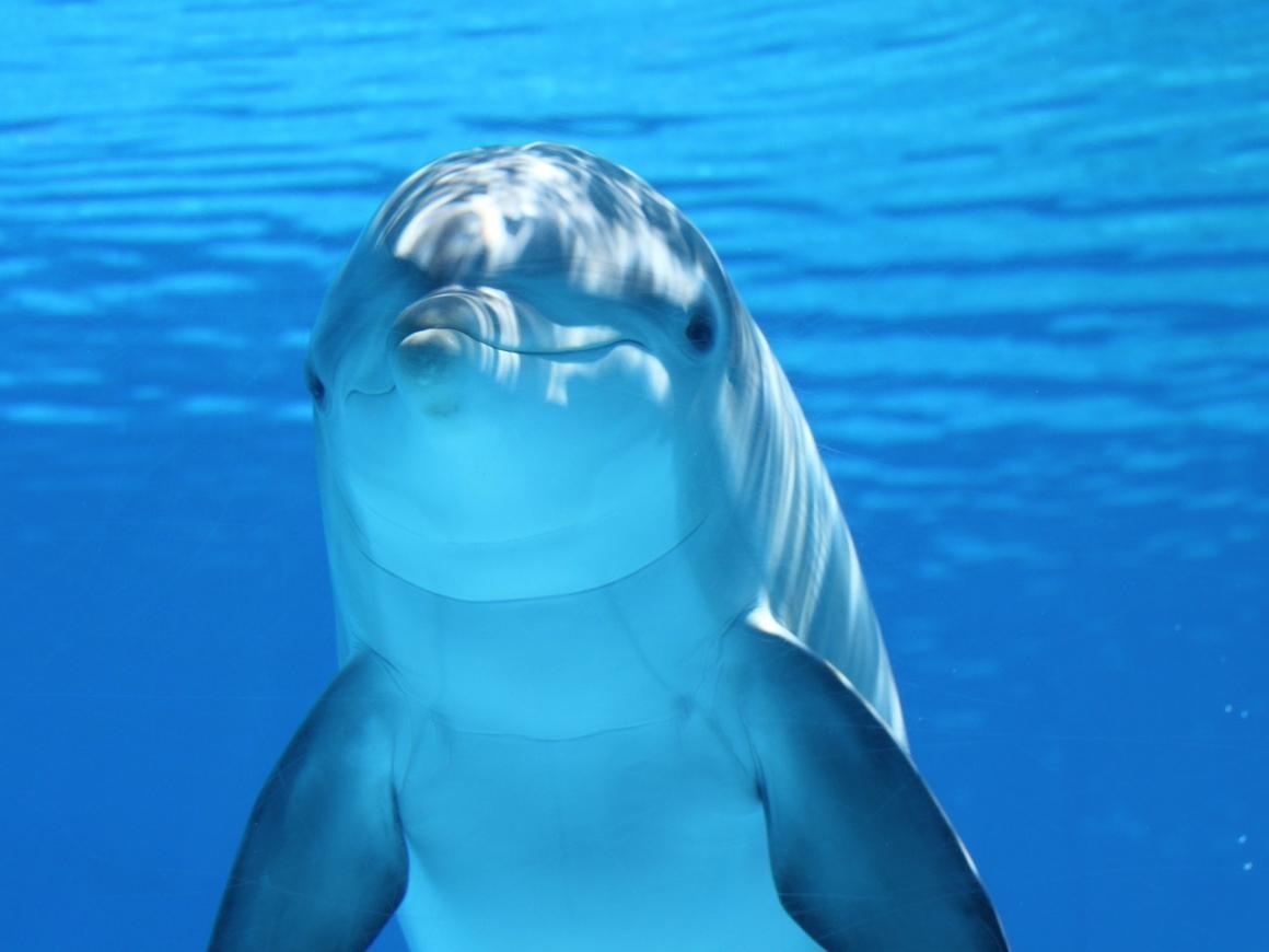 Учёные нашли дельфино-кита. Или кито-дельфина. В любом случае, большая редкость