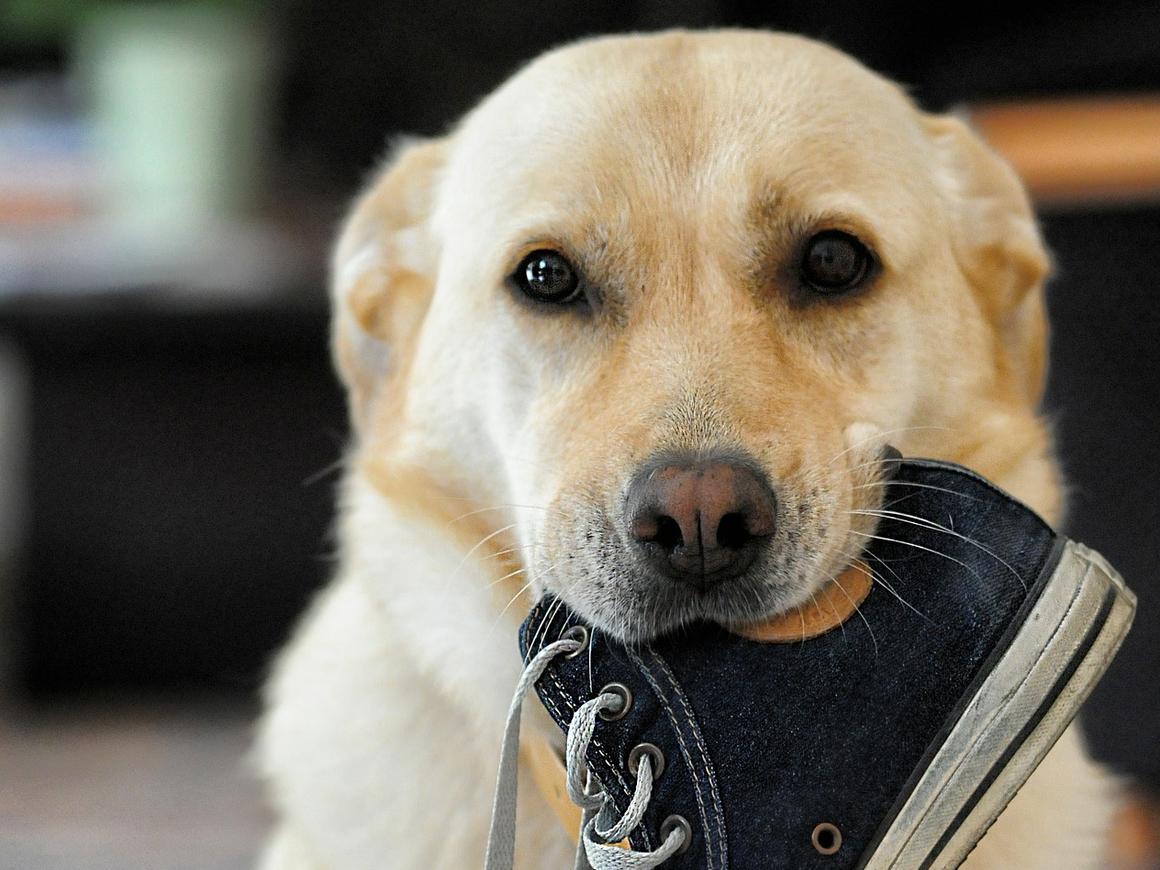 Как помочь собаке в жару? У неё же лапки! Учимся у полицейских (фото + видео)