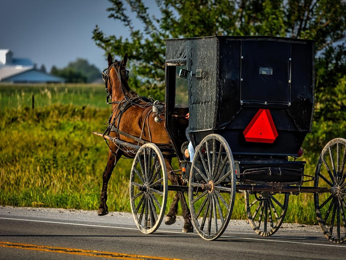 Uber добрался до амишей: в США можно заказать конное такси