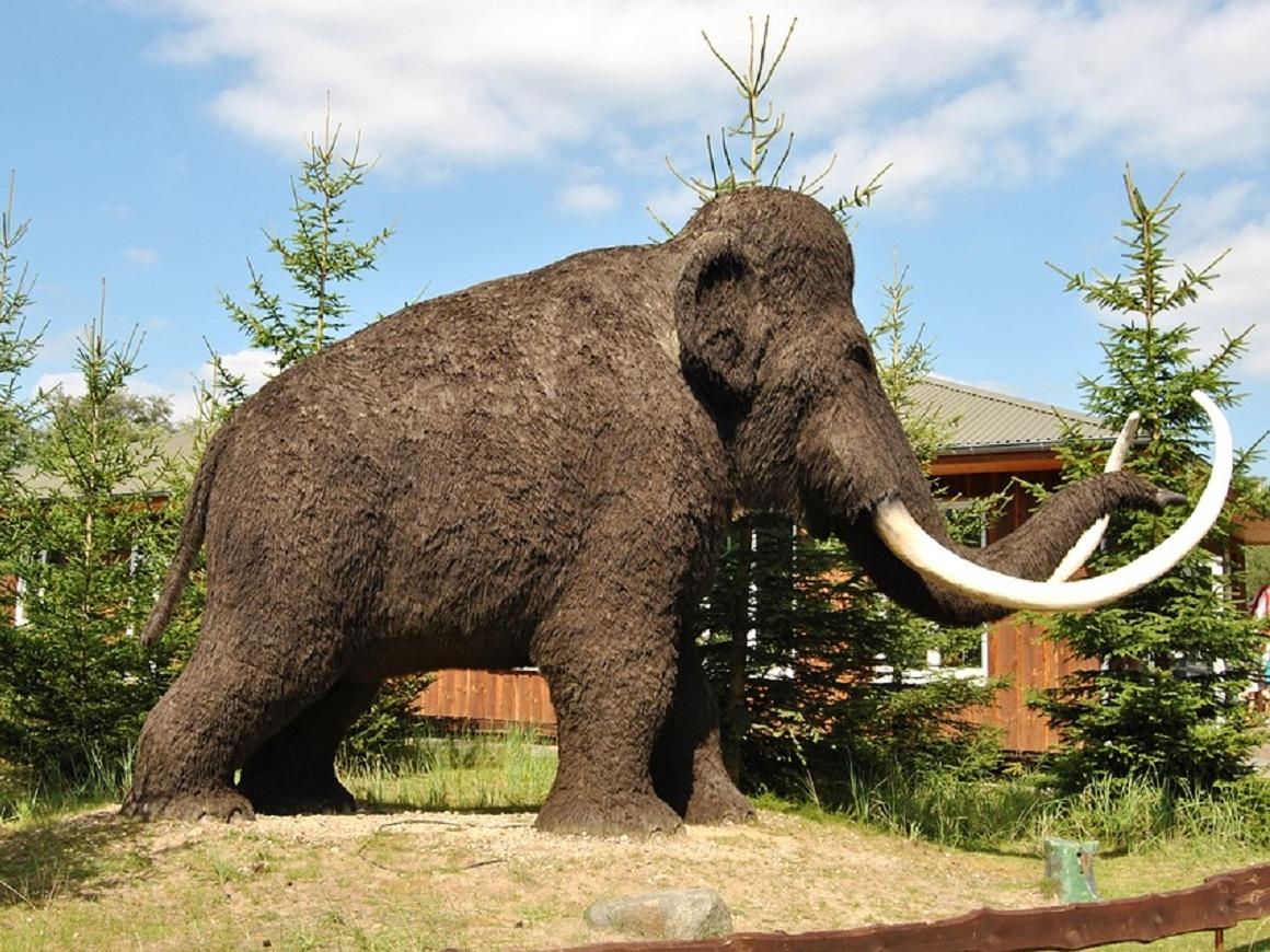 Подходи-налетай: в Якутии продается шапка из шерсти мамонта (видео)