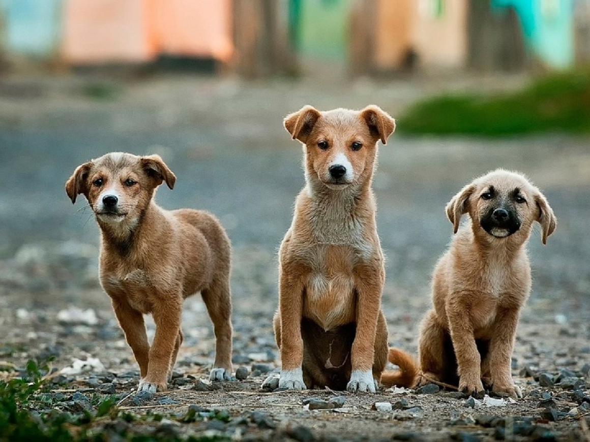 Хозяйка не бросила 25 своих собак, даже рискуя утонуть вместе с ними (видео)
