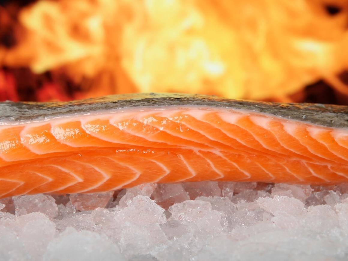 Шикарный улов! В России дешевеет красная рыба – пока на оптовом рынке