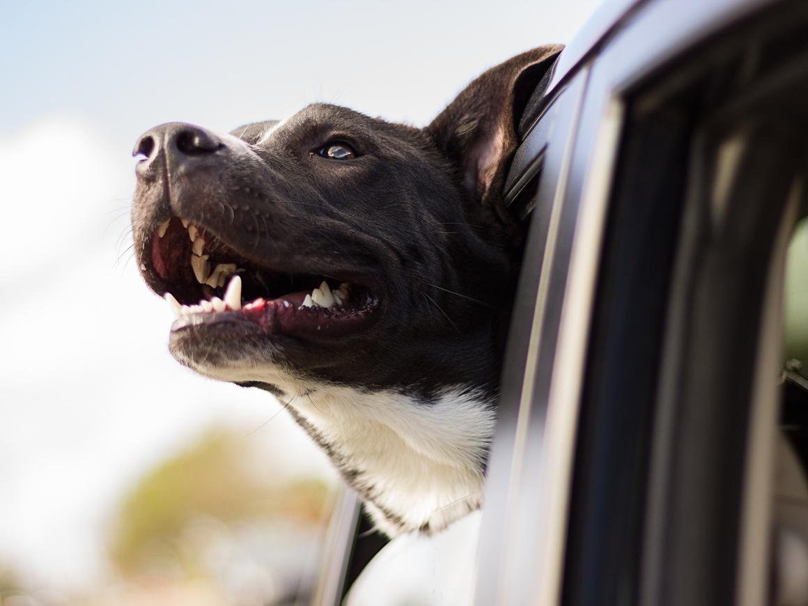 Всё для четвероногих! В этой машине собака легко сможет принять душ (видео)