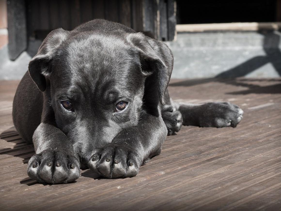 В Англии запретят электроошейники для кошек и собак. А нечего зверушек мучить