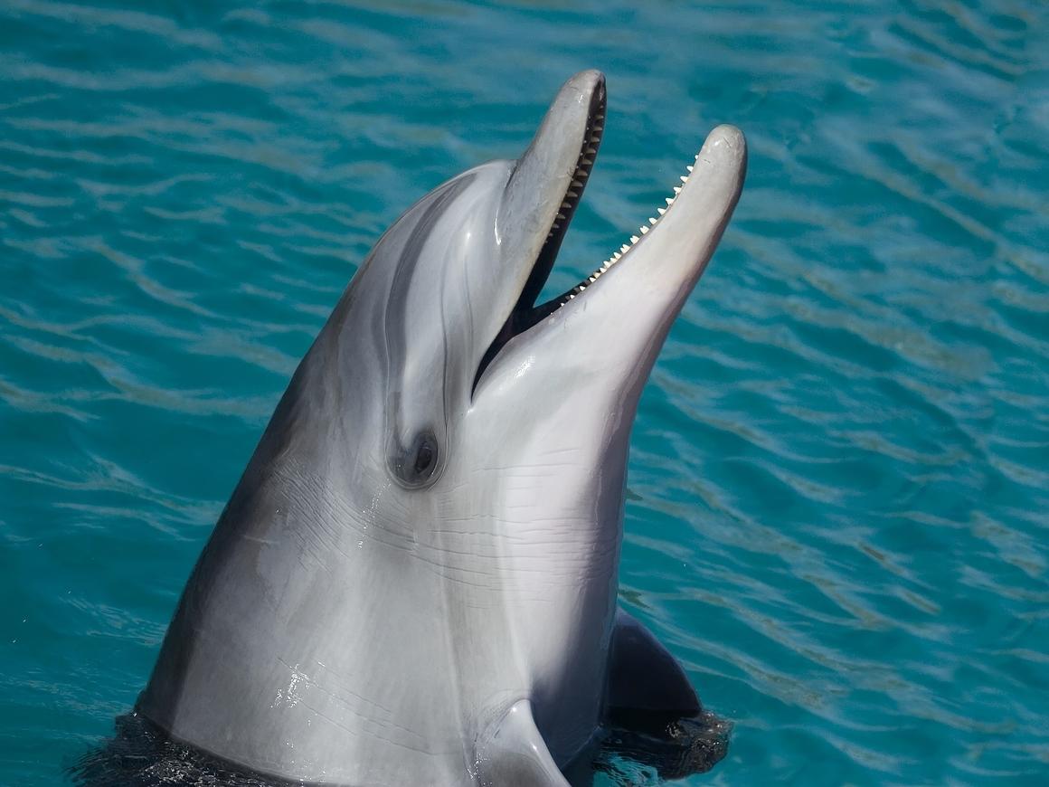 Дельфины добрые, и им ничего от вас не нужно. Ну, в брачный период почти ничего