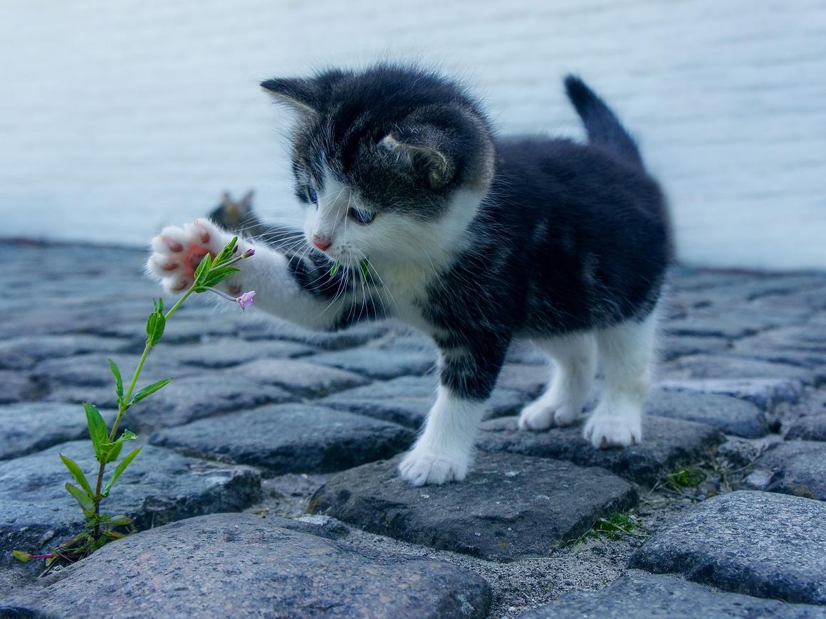Бан для котиков - в Новой Зеландии запретят домашних кошек из-за птиц