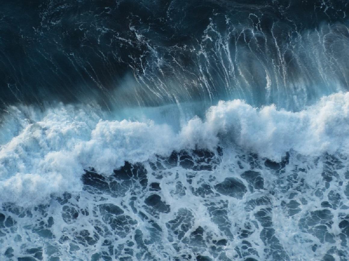 ООН готовит договор для защиты открытого моря. Зачем он нужен?