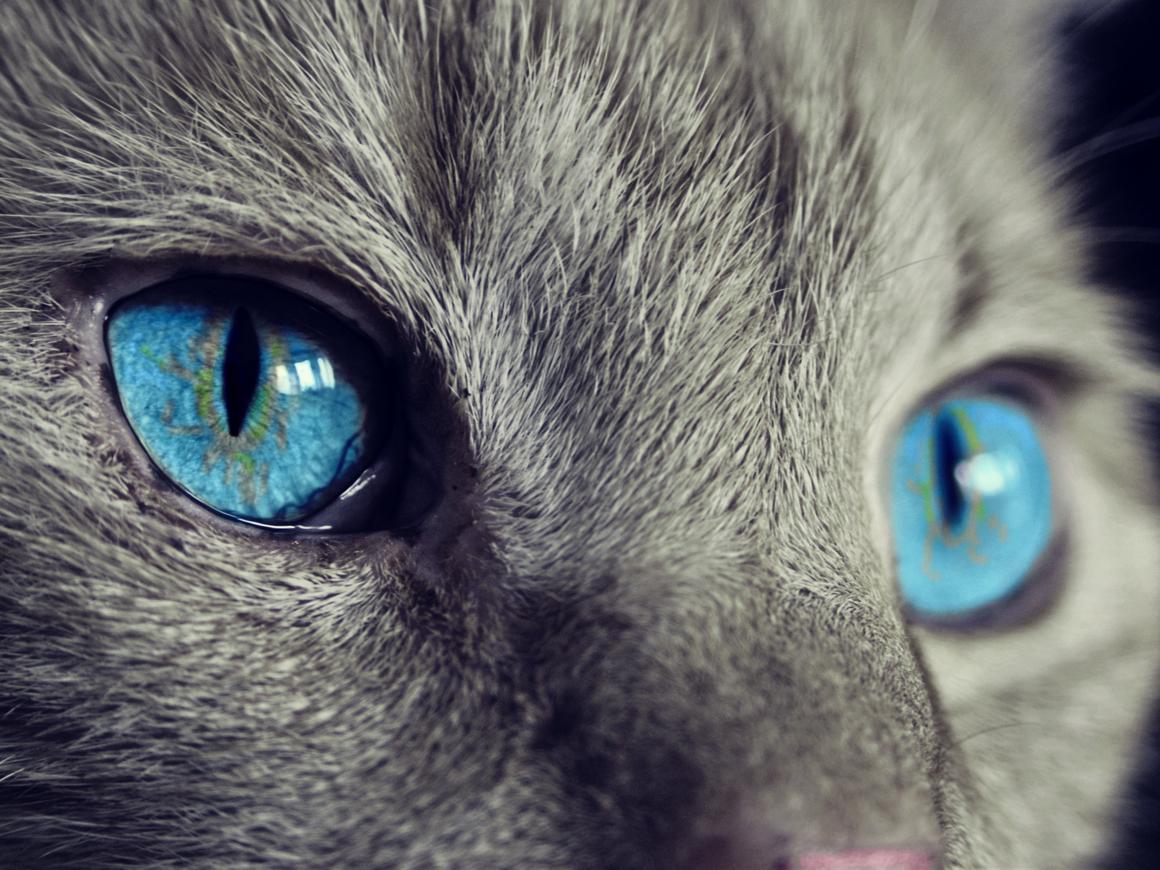 Не это ли самый грустный кот на планете? (видео)
