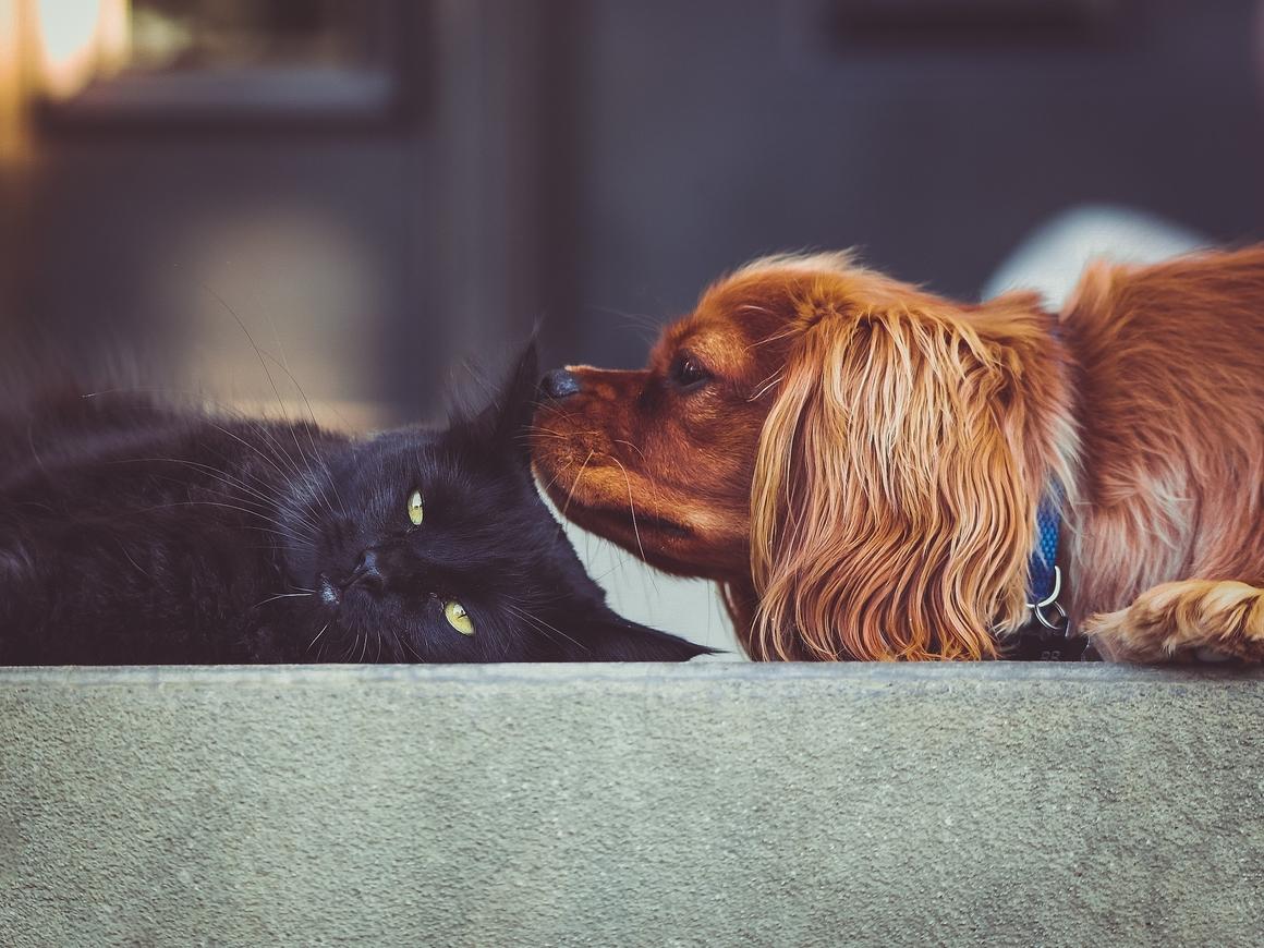 """""""Детский мир"""" откроет магазины для кошек и собак"""