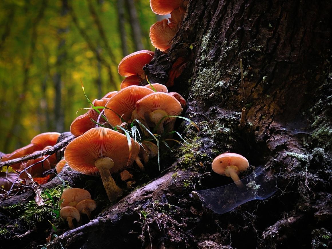Учёные верят, что грибы уничтожат пластик быстрее, чем он - Землю