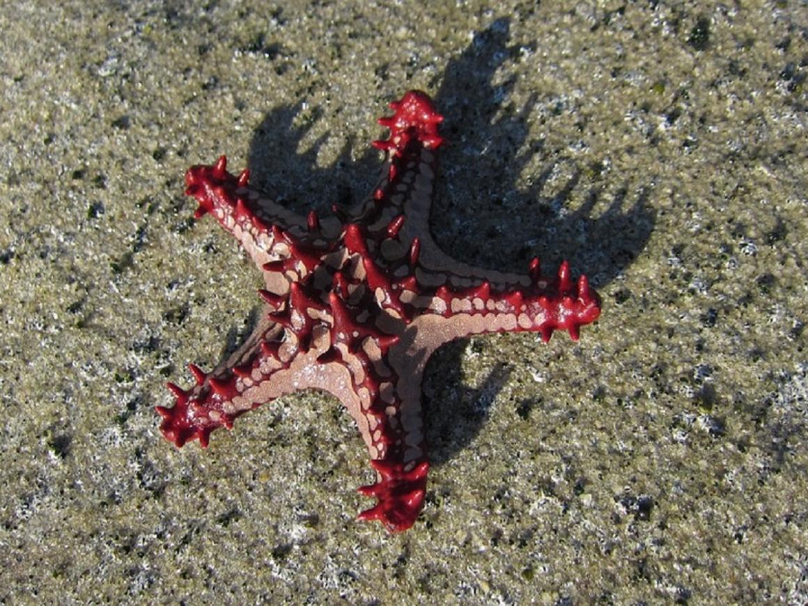 Робот-убийца встанет на защиту коралловых рифов Австралии