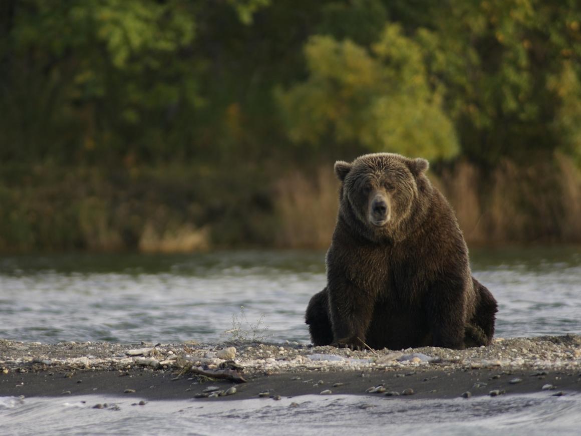 """Круче, чем """"Защитники"""" - медведь Войтек прошёл Вторую мировую и стал легендой"""