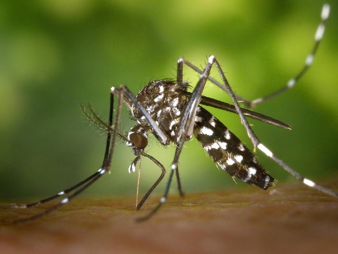 Ученые знают, как уничтожить малярийных комаров, но какие будут последствия?