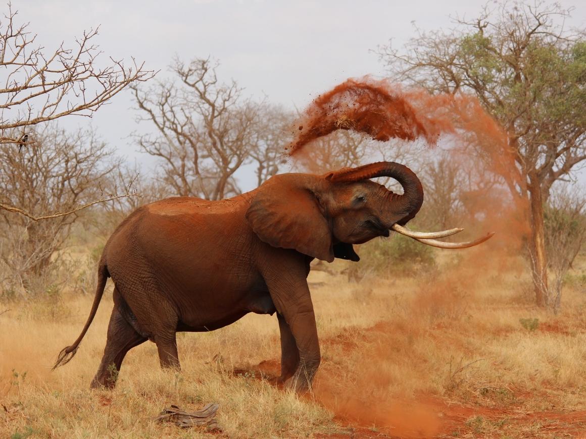 Почему у слонов столько морщин? Может, им стоит попробовать ботокс?