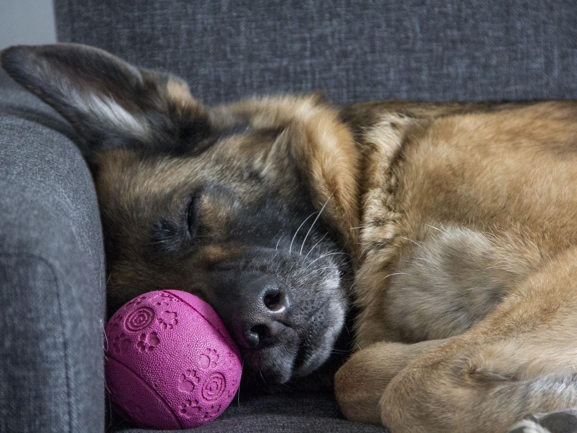 Поговорим о наболевшем: Что такое сон, зачем мы спим и можно ли спать впрок?