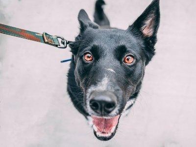 В Южной Корее собак уберут из меню - закрыт крупнейший собачий мясокомбинат