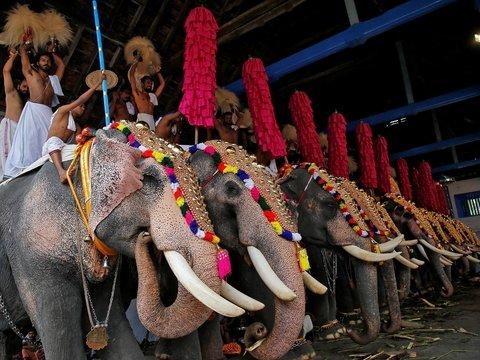 Слонам тоже нужен отпуск. Как насчет 48 дней спа? (видео)