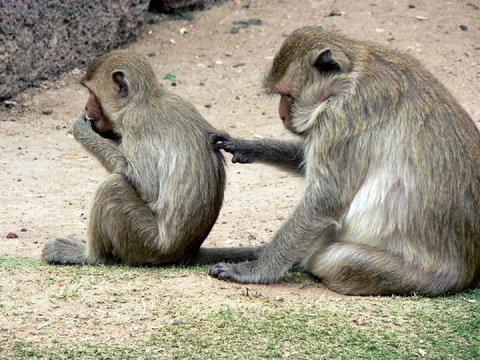 """""""Социальные инфекции"""" передаются не только среди людей, но и в мире животных"""