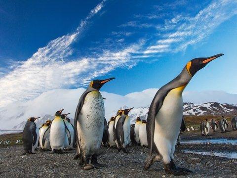 Пингвинья ОРВИ: в Антарктике птицы подхватили человеческие болезни