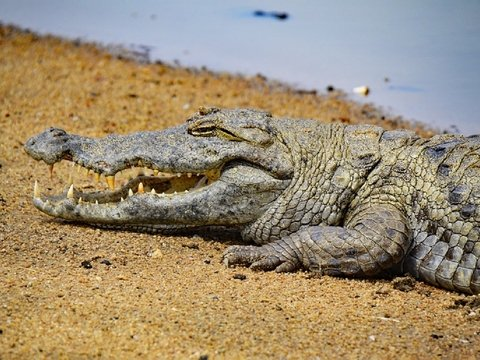 Австралийские власти намеренно затопили 2000 домов. Теперь там плавают крокодилы