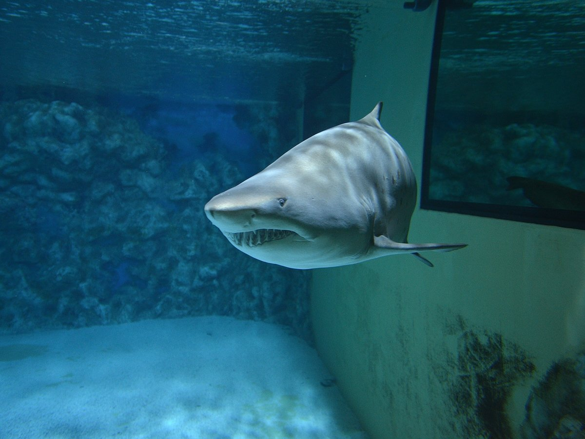 Китайские гурманы едят акул и губят экологию