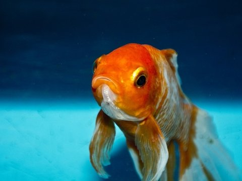 Новое исследование озадачило учёных: то ли рыбки умные, то ли тест плохой
