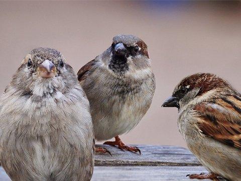 Пернатый предок воробьев и попугаев ел зерно ещё 52 миллиона лет назад
