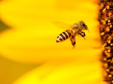 Маленький мозг не мешает пчёлам понимать математику и решать примеры
