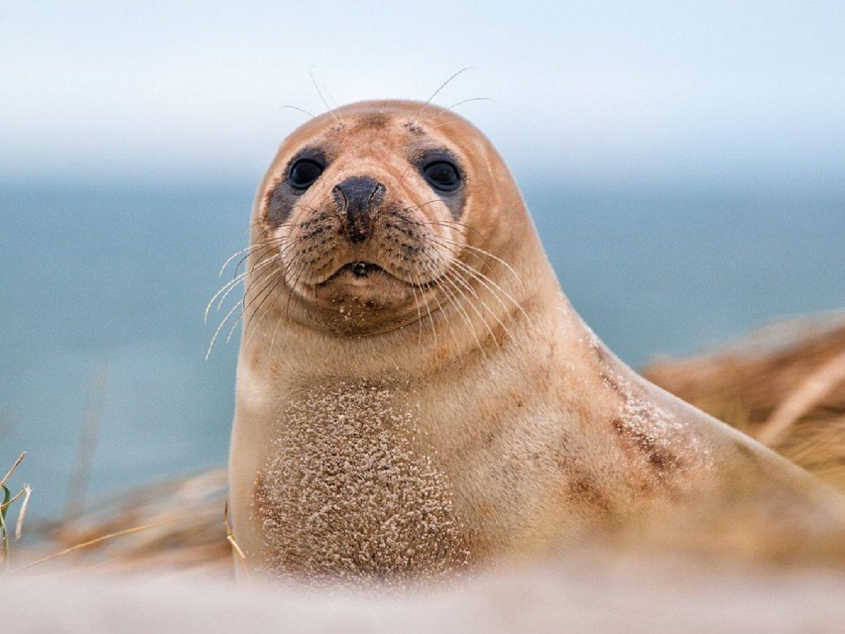 Флешка, обнаруженная в экскрементах морского леопарда, нашла своего владельца