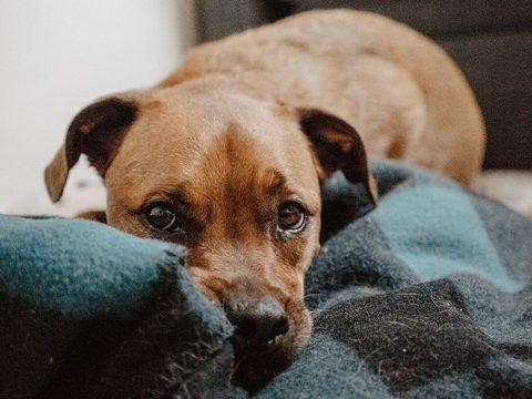 Гав-гав запрещён: во Франции собак штрафуют за громкий лай