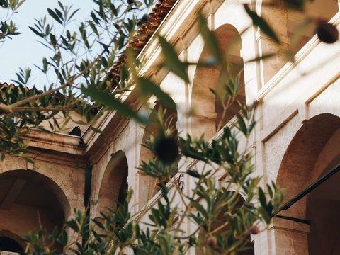 """В Испании можно """"усыновить"""" оливковое дерево. И всем от этого только польза"""
