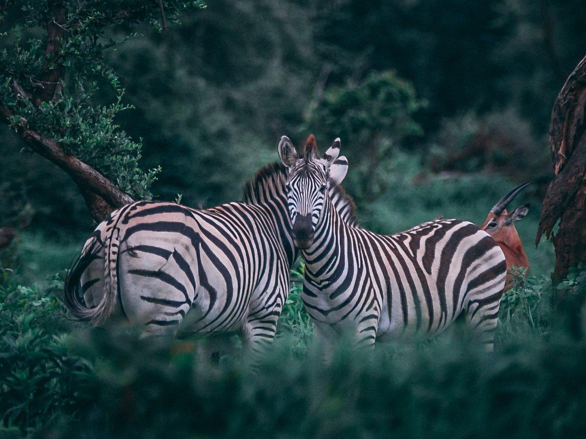 Учёные предупреждают: полное вымирание грозит более 1200 видам животных