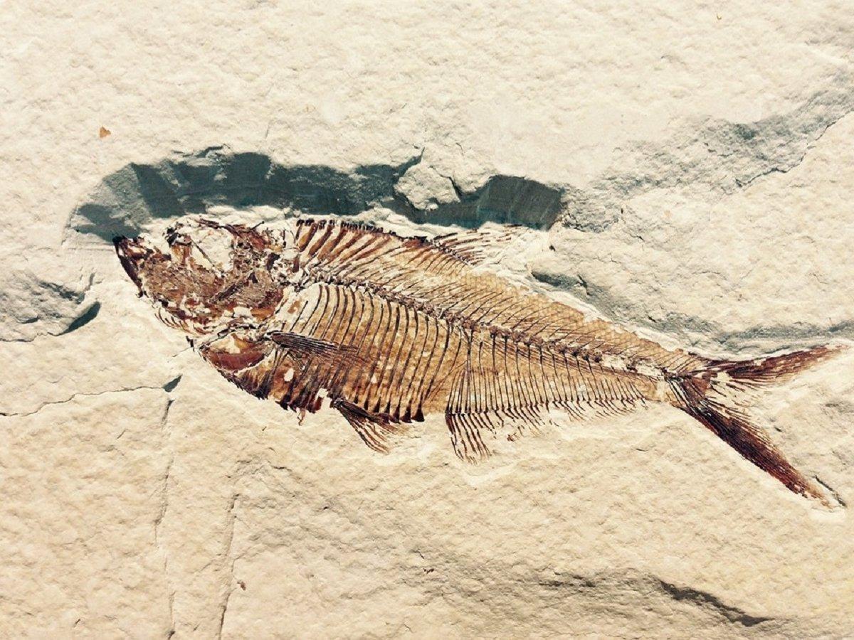 Учёные нашли кладбище животных. Все они погибли в один день 66 млн лет назад